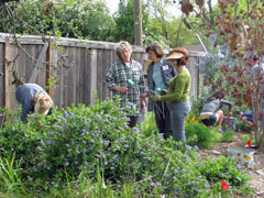 Volunteers weeding and marking plants