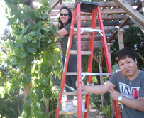 volunteers typing up grape vines at the arbor
